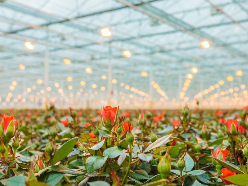Duurzamer telen in Westland vanaf 2022